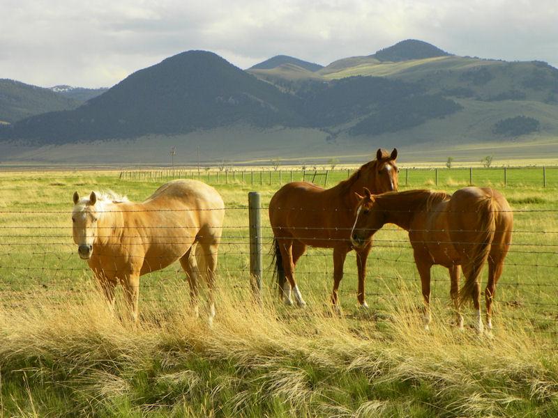 صور خلفيات خيول عربية اصيلة صور احصنة عربية اصيلة بجودة HD (22)