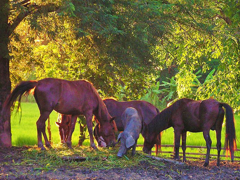 صور خلفيات خيول عربية اصيلة صور احصنة عربية اصيلة بجودة HD (23)