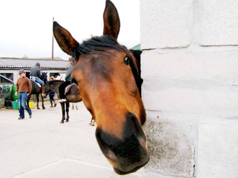 صور خلفيات خيول عربية اصيلة صور احصنة عربية اصيلة بجودة HD (3)