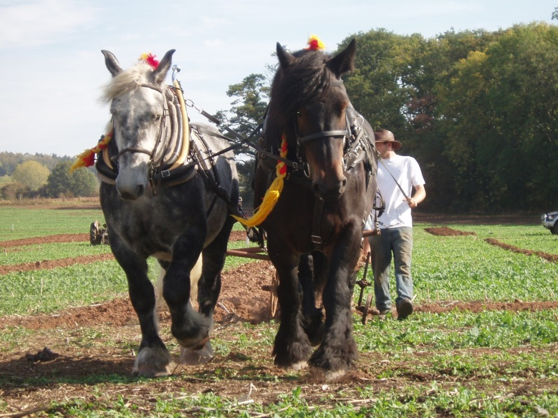 صور خلفيات خيول عربية اصيلة صور احصنة عربية اصيلة بجودة HD (32)