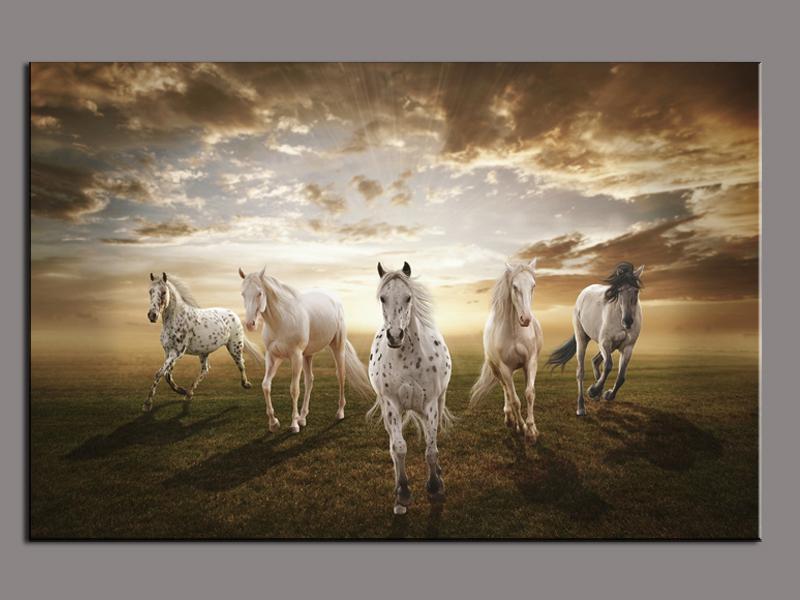 صور خلفيات خيول عربية اصيلة صور احصنة عربية اصيلة بجودة HD (33)