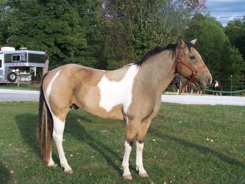 صور خلفيات خيول عربية اصيلة صور احصنة عربية اصيلة بجودة HD (36)