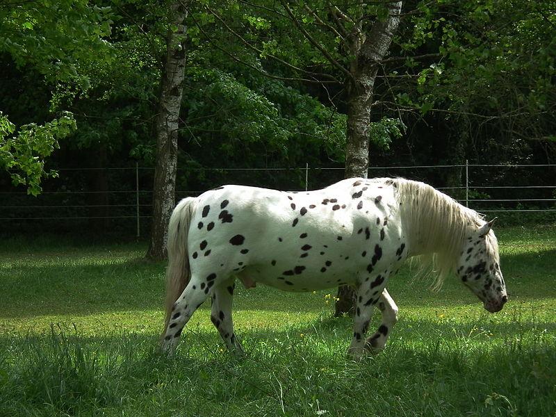 صور خلفيات خيول عربية اصيلة صور احصنة عربية اصيلة بجودة HD (39)