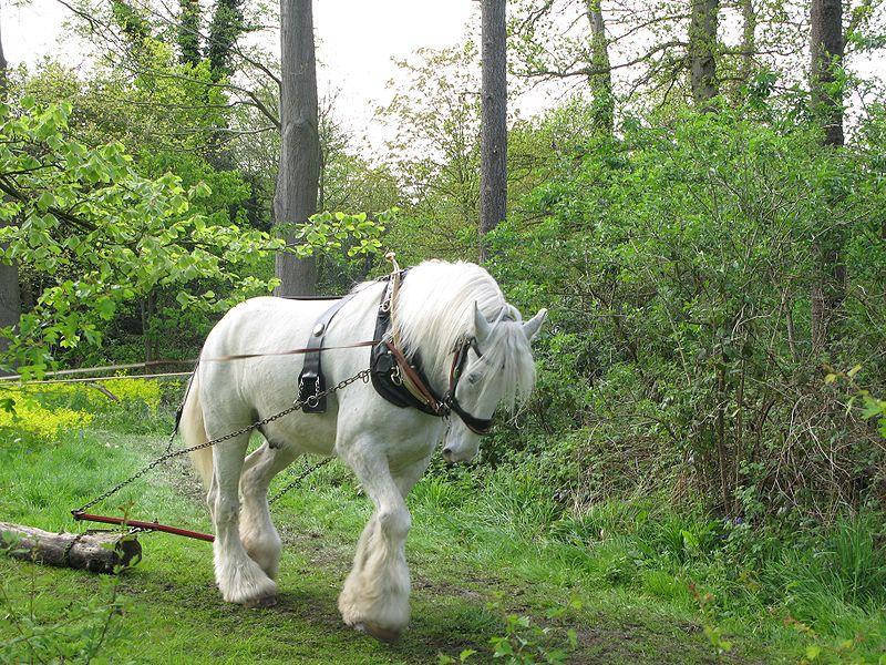 صور خلفيات خيول عربية اصيلة صور احصنة عربية اصيلة بجودة HD (40)