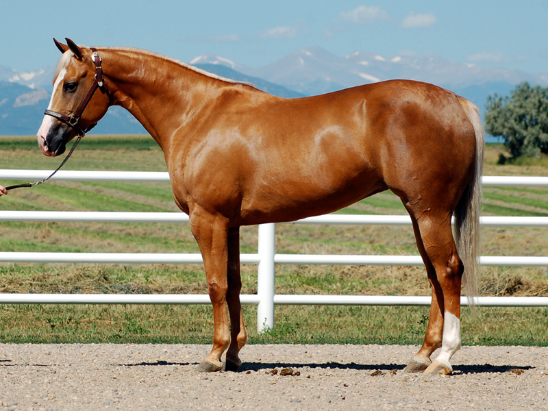 صور خلفيات خيول عربية اصيلة صور احصنة عربية اصيلة بجودة HD (8)