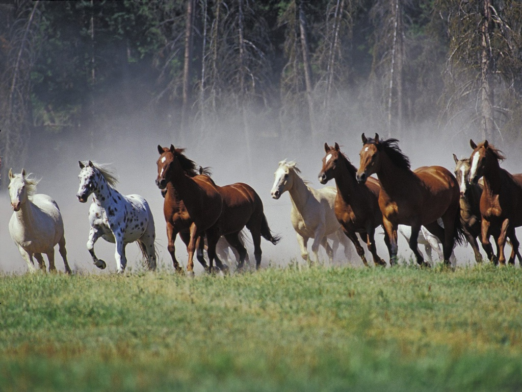 صور حصان HD خلفيات حصان جديدة بجودة عالية (14)