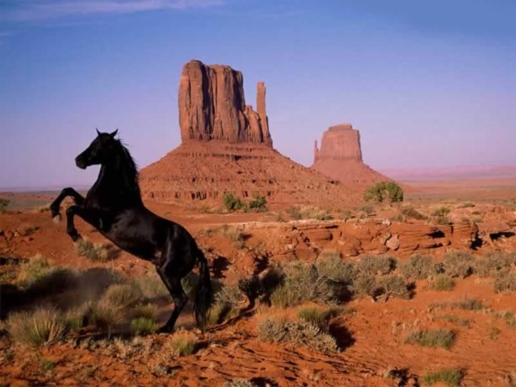صور حصان HD خلفيات حصان جديدة بجودة عالية (19)