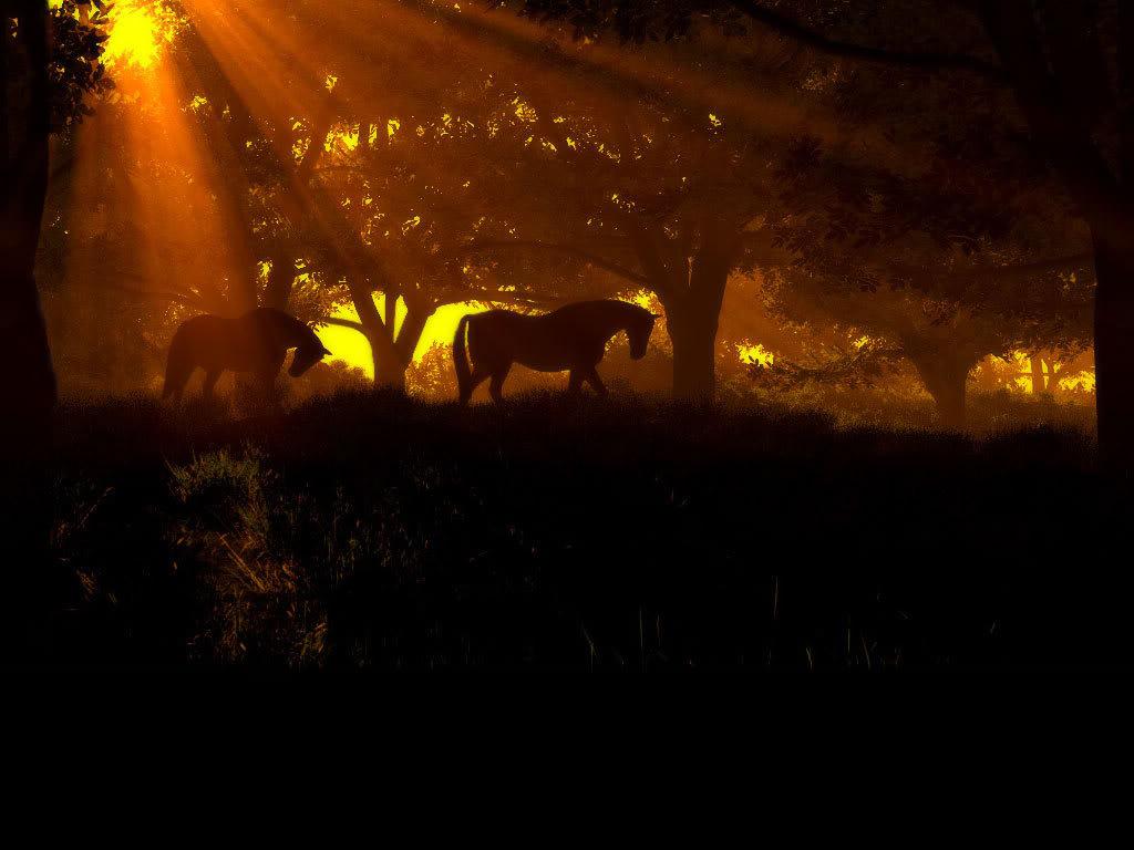 صور حصان HD خلفيات حصان جديدة بجودة عالية (21)