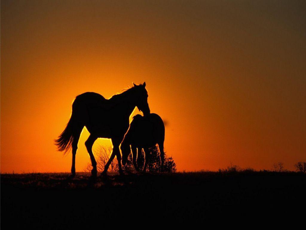 صور حصان HD خلفيات حصان جديدة بجودة عالية (26)