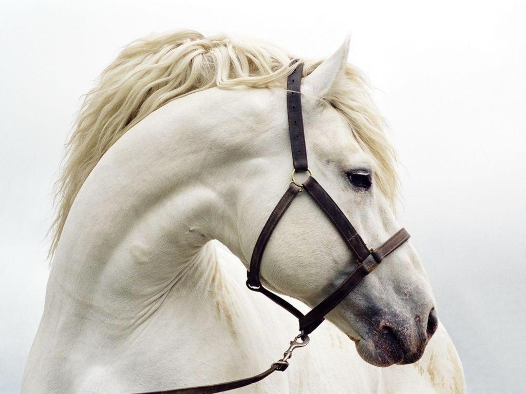 صور حصان HD خلفيات حصان جديدة بجودة عالية (27)