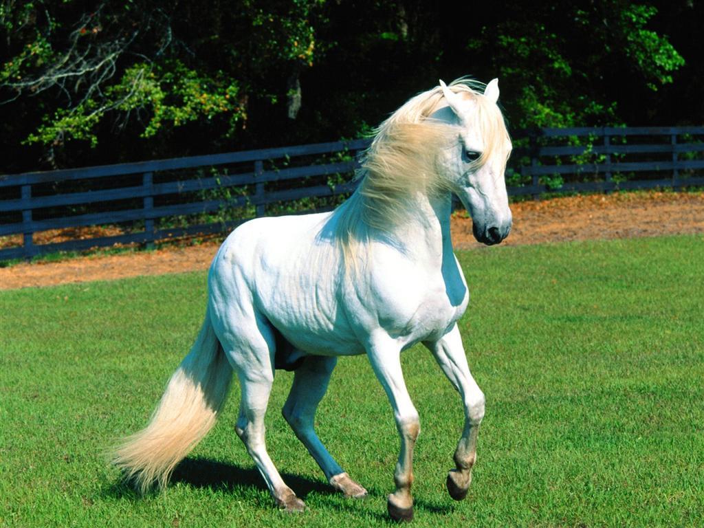 صور حصان HD خلفيات حصان جديدة بجودة عالية (28)