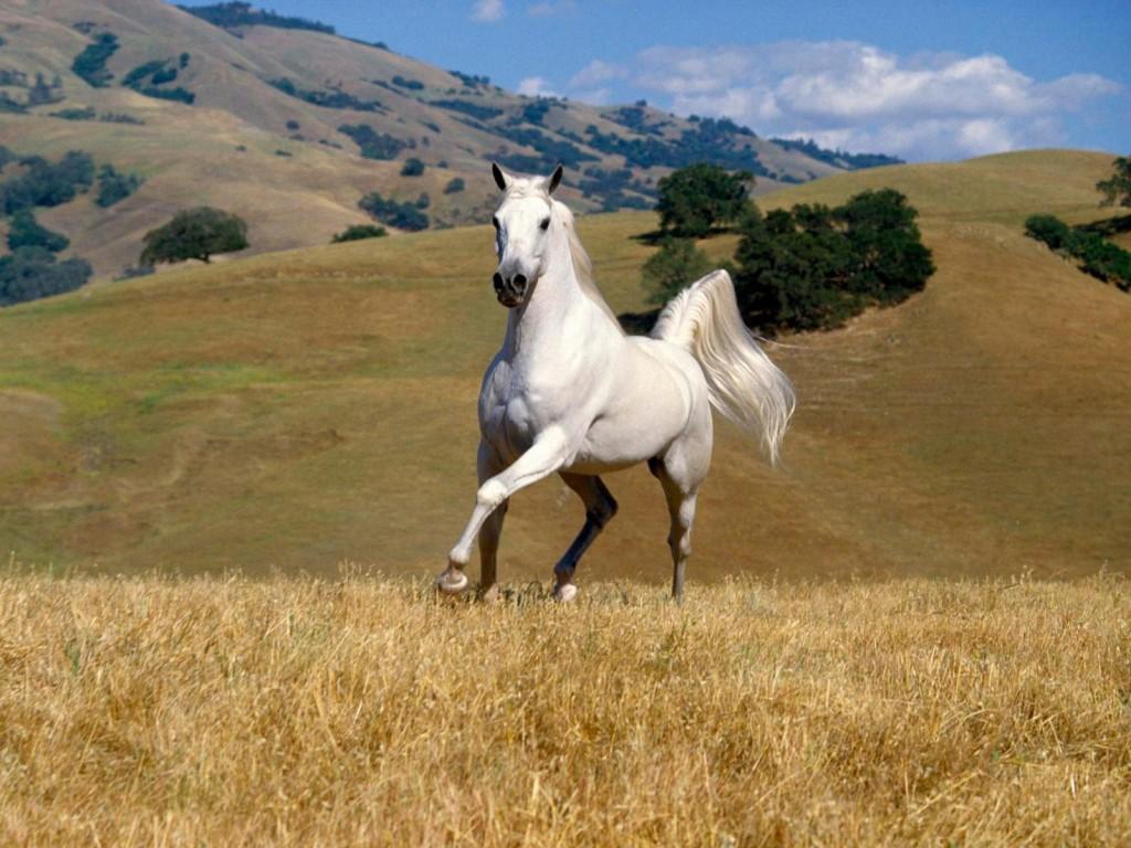 صور حصان HD خلفيات حصان جديدة بجودة عالية (29)
