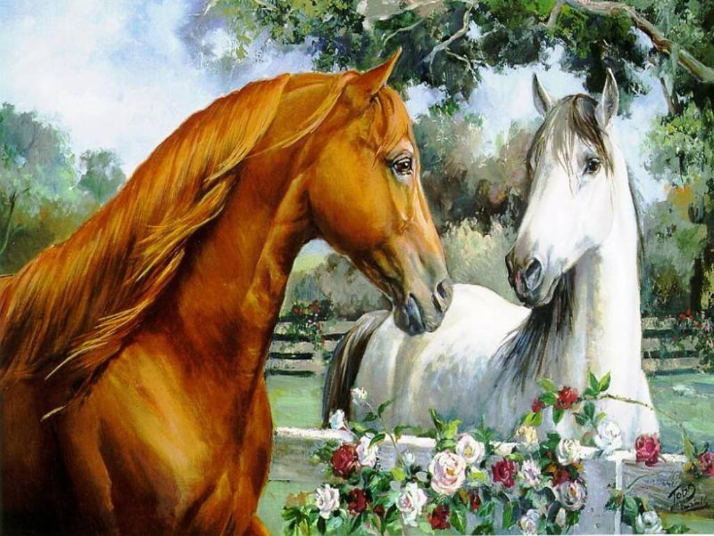 صور حصان HD خلفيات حصان جديدة بجودة عالية (3)