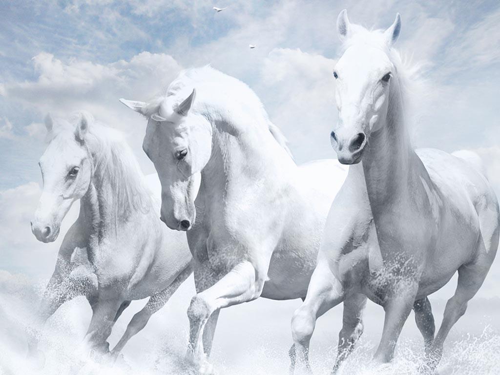 صور حصان HD خلفيات حصان جديدة بجودة عالية (30)