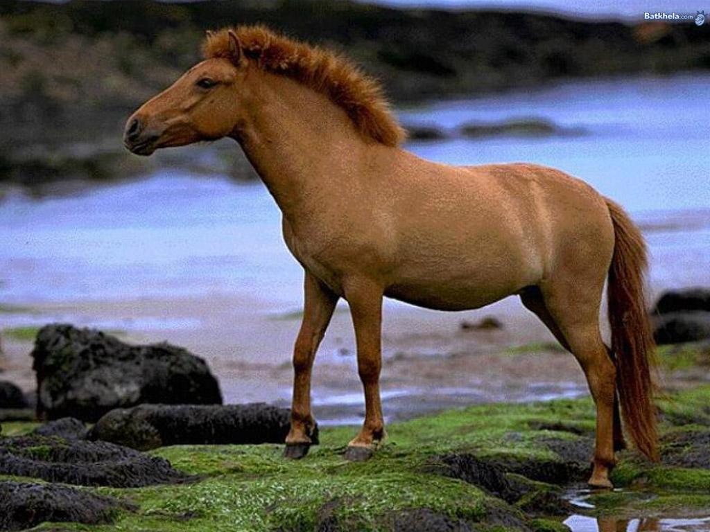 صور حصان HD خلفيات حصان جديدة بجودة عالية (33)
