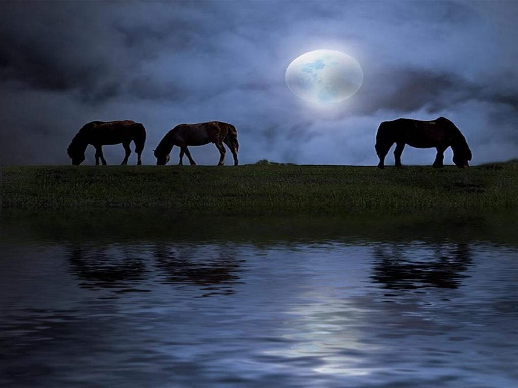 صور حصان HD خلفيات حصان جديدة بجودة عالية (5)