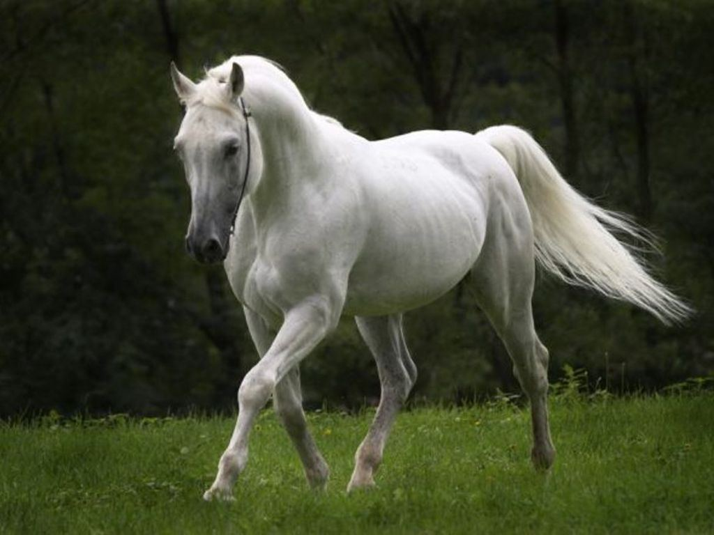 صور حصان HD خلفيات حصان جديدة بجودة عالية (9)