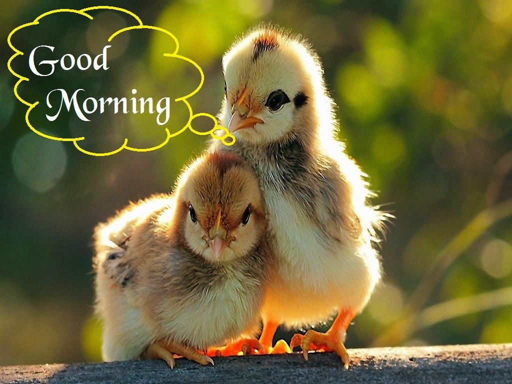 صور صباح الخير Good Morning صور مكتوب عليها صباح الخير (25)