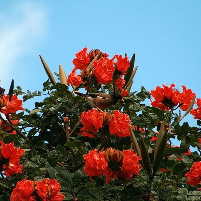 صور ورود جميلة اجمل صور الورد والازهار بجودة HD (1)