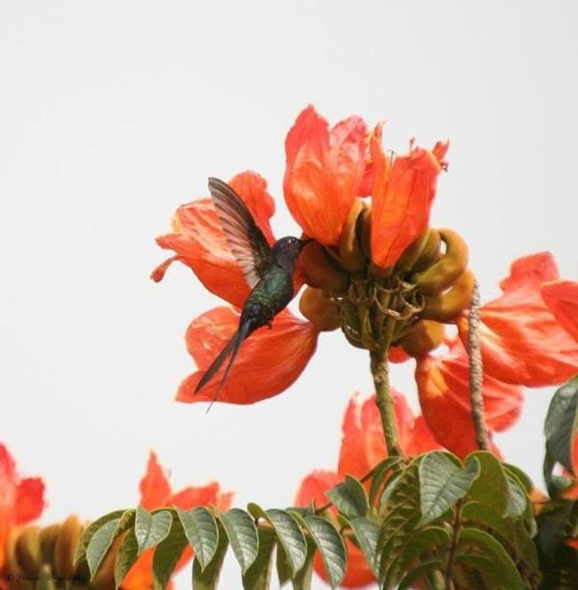 صور ورود جميلة اجمل صور الورد والازهار بجودة HD (11)