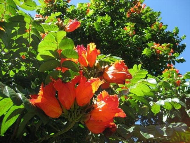 صور ورود جميلة اجمل صور الورد والازهار بجودة HD (14)