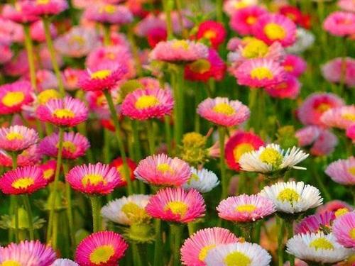 صور ورود جميلة اجمل صور الورد والازهار بجودة HD (17)