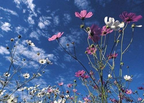 صور ورود جميلة اجمل صور الورد والازهار بجودة HD (19)
