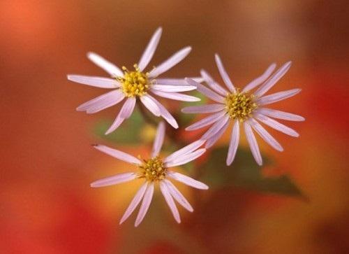 صور ورود جميلة اجمل صور الورد والازهار بجودة HD (21)
