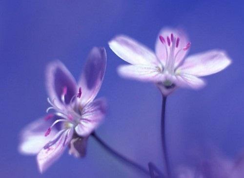 صور ورود جميلة اجمل صور الورد والازهار بجودة HD (22)