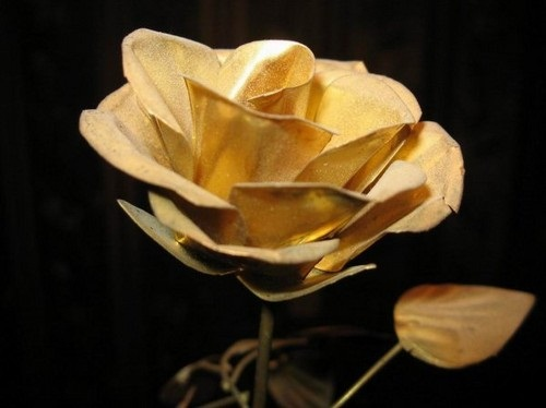 صور ورود جميلة اجمل صور الورد والازهار بجودة HD (23)