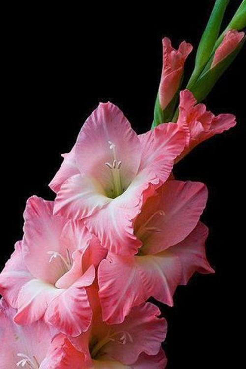 صور ورود جميلة اجمل صور الورد والازهار بجودة HD (31)