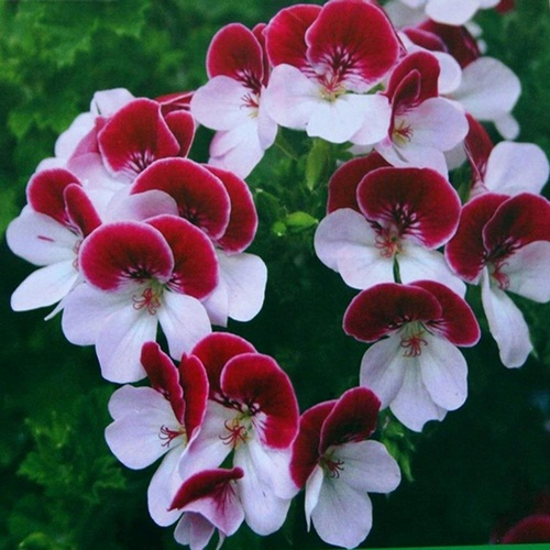 صور ورود جميلة اجمل صور الورد والازهار بجودة HD (32)