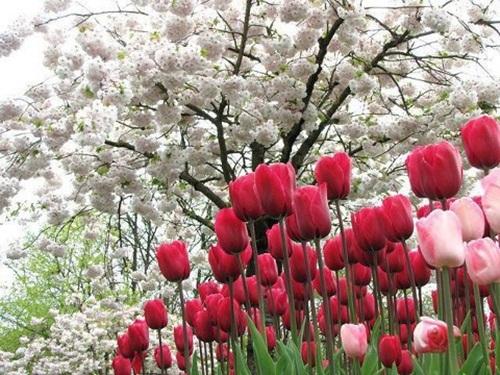 صور ورود جميلة اجمل صور الورد والازهار بجودة HD (33)