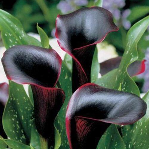 صور ورود جميلة اجمل صور الورد والازهار بجودة HD (34)