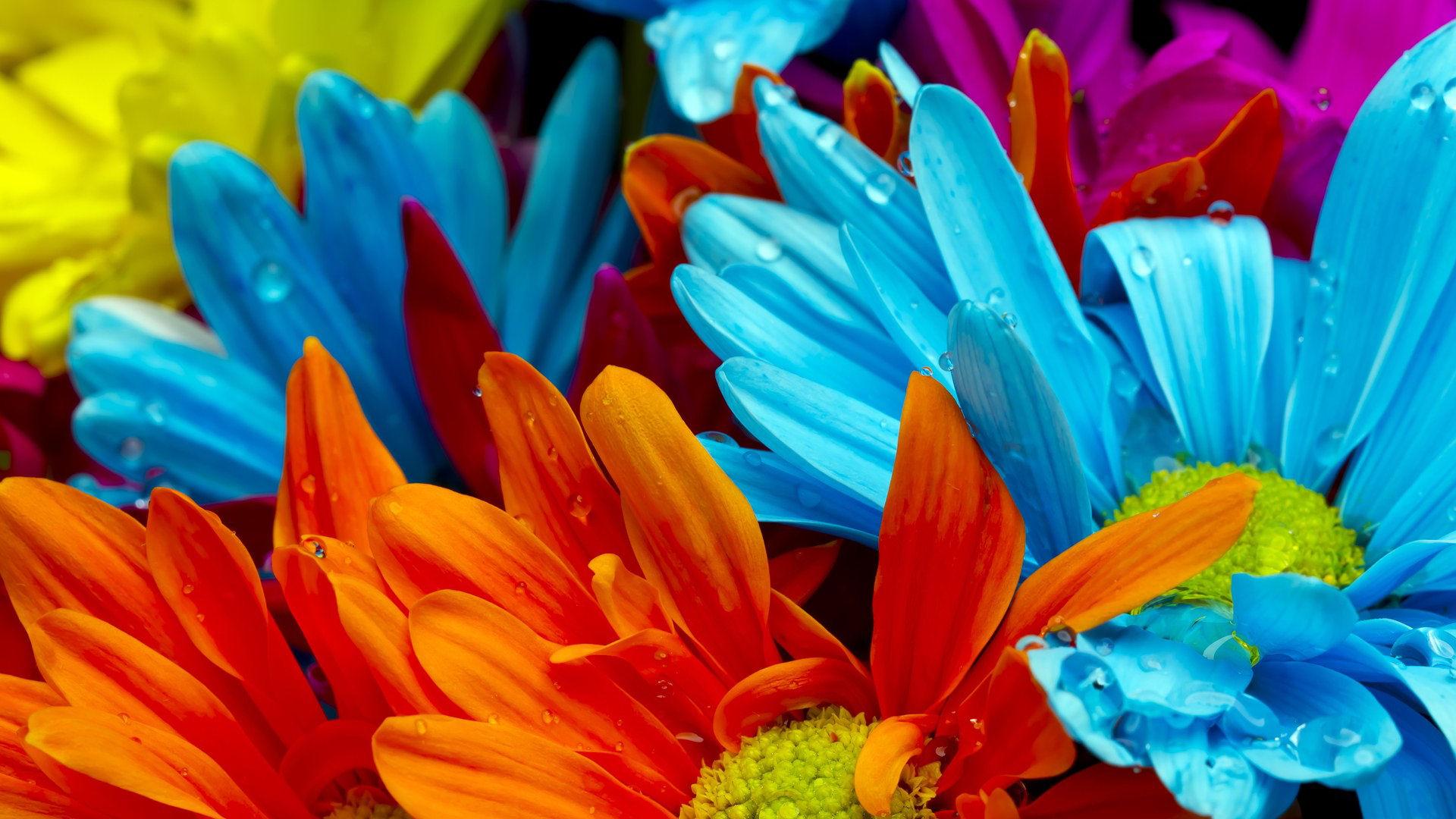 صور ورود جميلة اجمل صور الورد والازهار بجودة HD (41)
