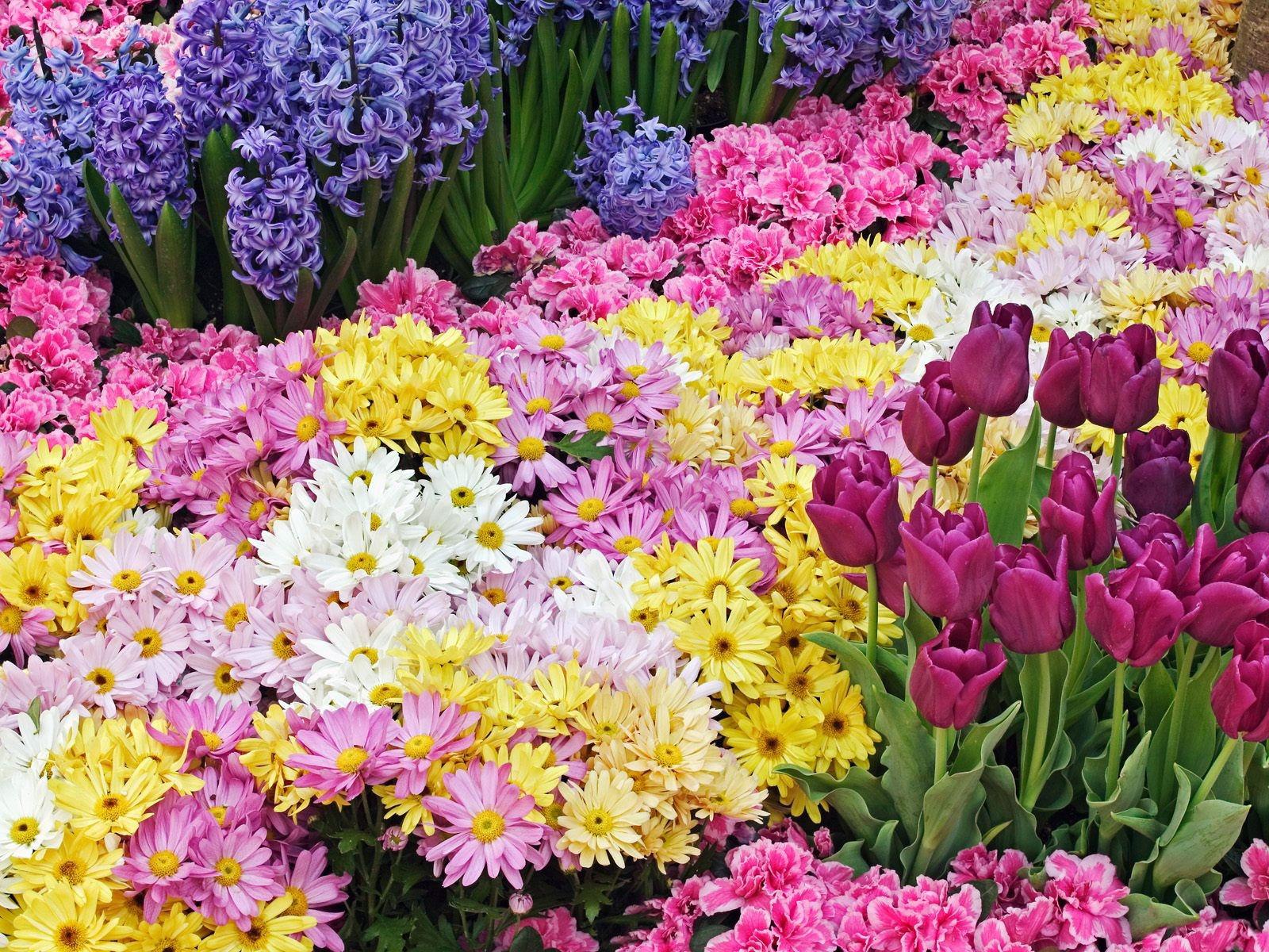صور ورود جميلة اجمل صور الورد والازهار بجودة HD (46)
