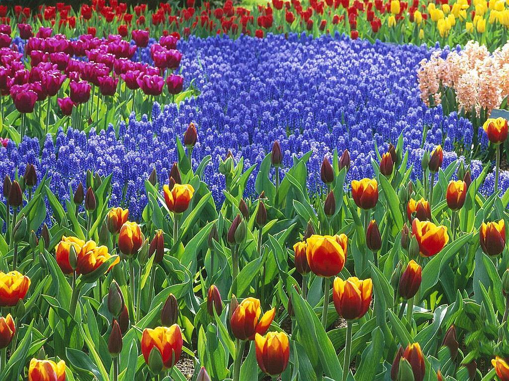 صور ورود جميلة اجمل صور الورد والازهار بجودة HD (47)