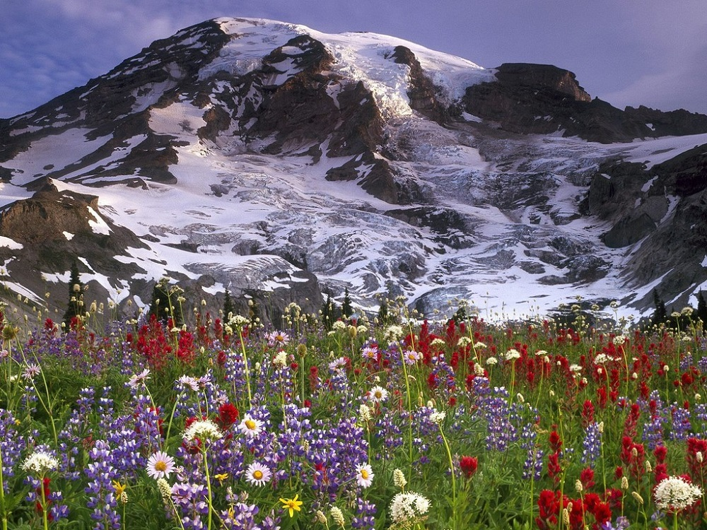 صور ورود جميلة اجمل صور الورد والازهار بجودة HD (48)