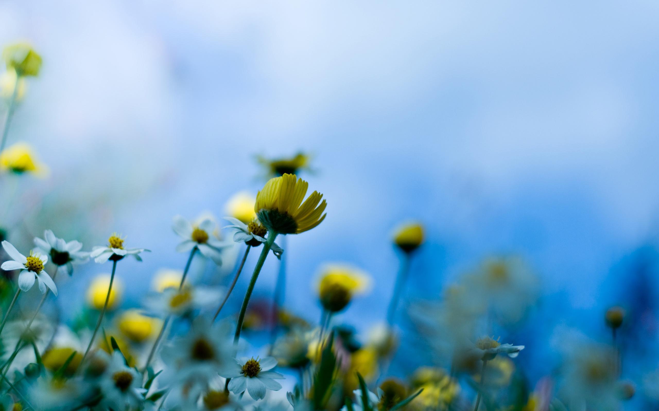 صور ورود جميلة اجمل صور الورد والازهار بجودة HD (49)