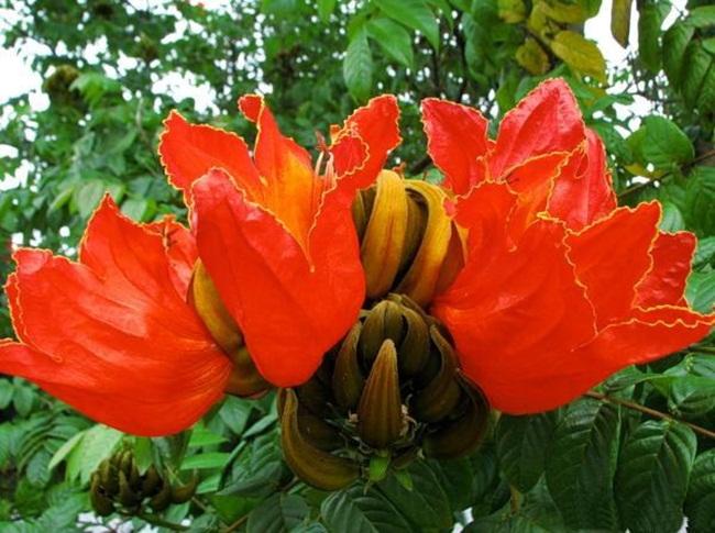 صور ورود جميلة اجمل صور الورد والازهار بجودة HD (6)