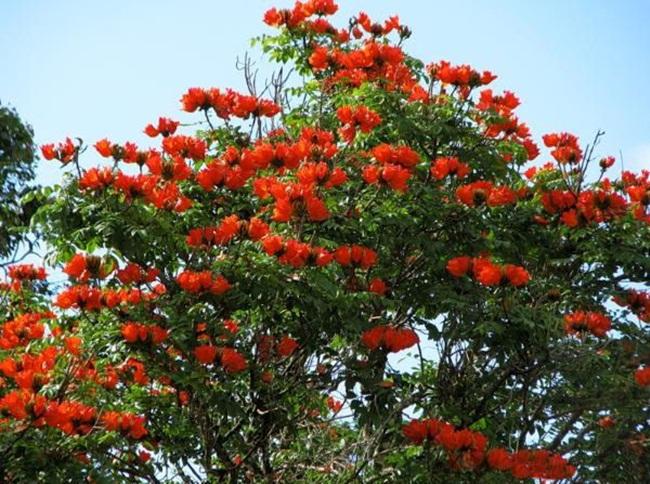 صور ورود جميلة اجمل صور الورد والازهار بجودة HD (7)