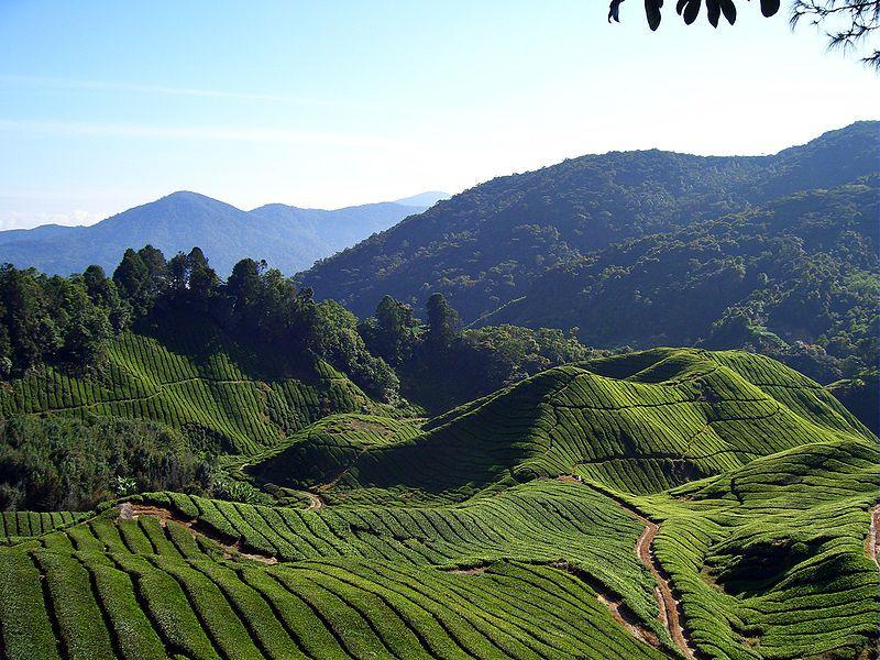 صور السياحة في ماليزيا صور من ماليزيا (42)