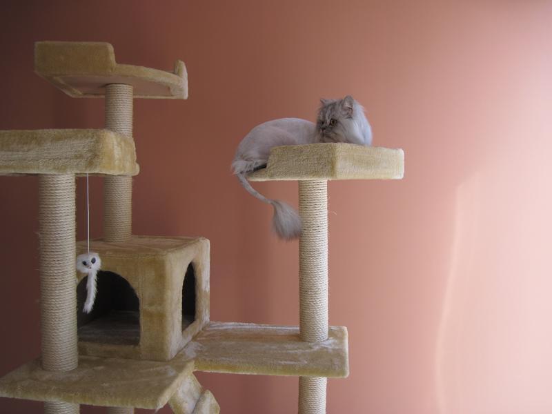 صور قطط حلوة وجميلة بسس جميلة روعة (1)
