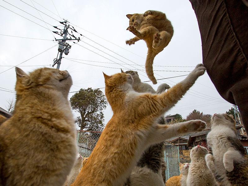 صور قطط حلوة وجميلة بسس جميلة روعة (10)