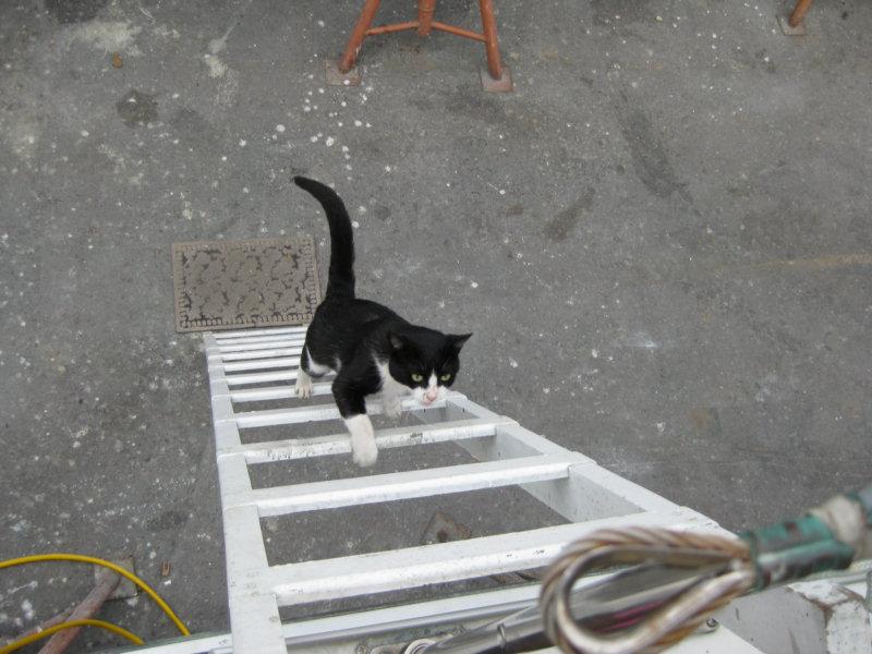 صور قطط حلوة وجميلة بسس جميلة روعة (14)