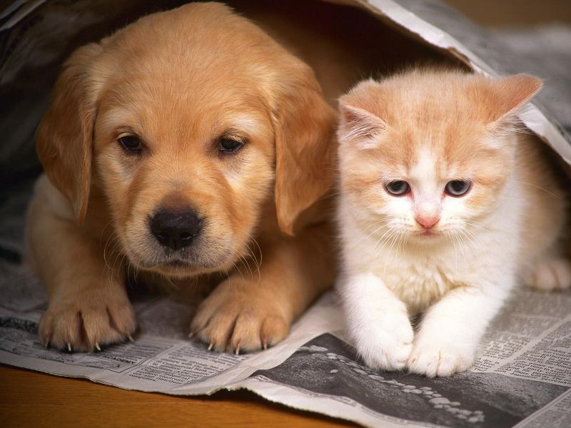 صور قطط حلوة وجميلة بسس جميلة روعة (17)