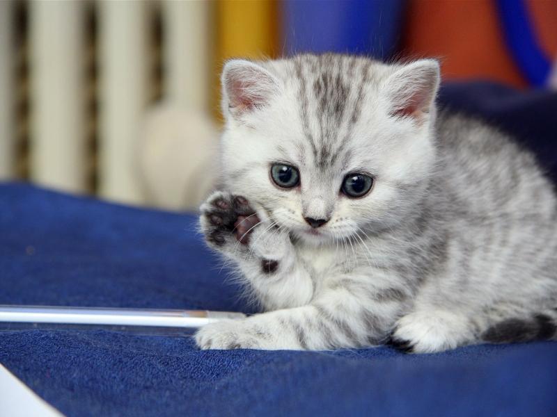 صور قطط حلوة وجميلة بسس جميلة روعة (19)