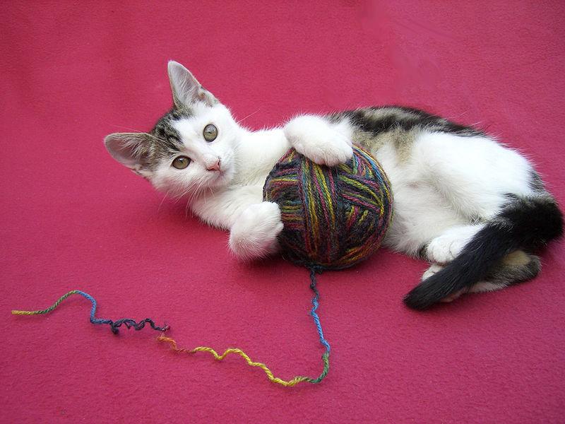 صور قطط حلوة وجميلة بسس جميلة روعة (2)