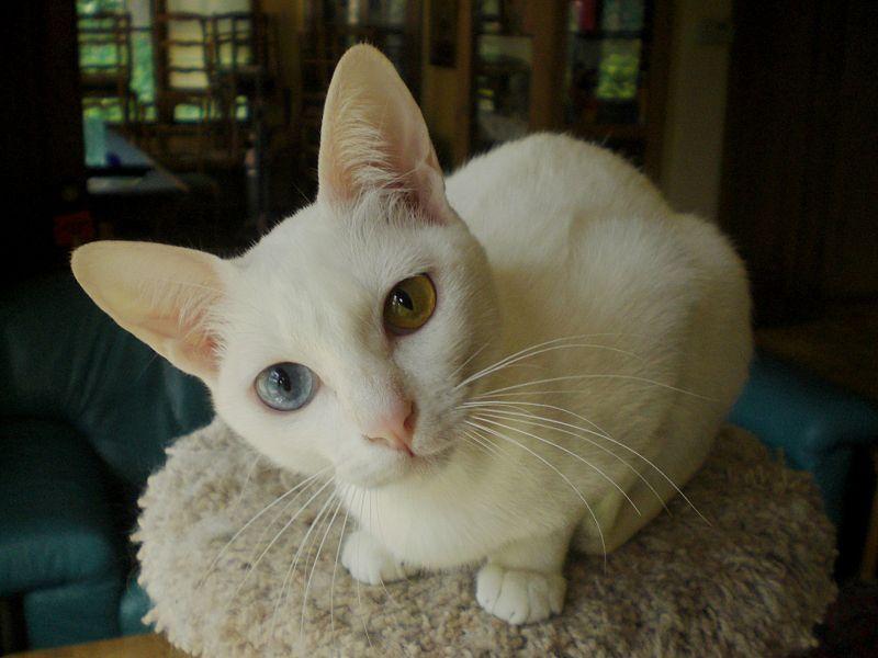 صور قطط حلوة وجميلة بسس جميلة روعة (20)