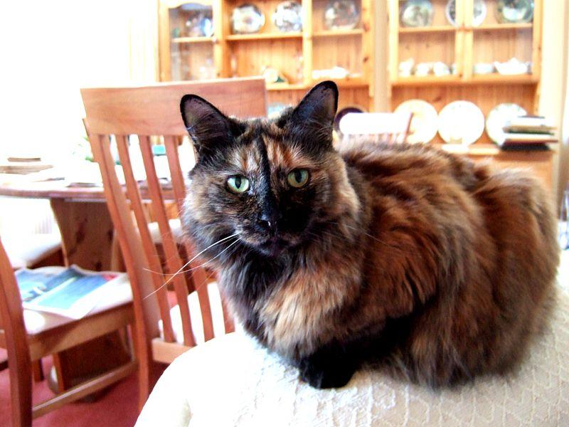 صور قطط حلوة وجميلة بسس جميلة روعة (21)